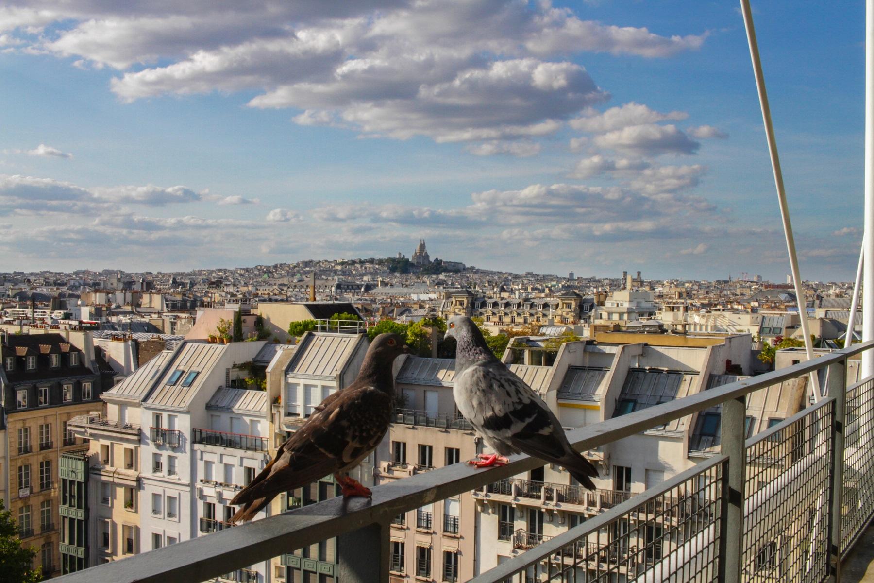 na-co-uwazac-przed-wyjazdem-do-francji