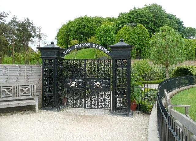 W Trującym Ogrodzie w Alnwick znajdziemy ponad 100 gatunków roślin,