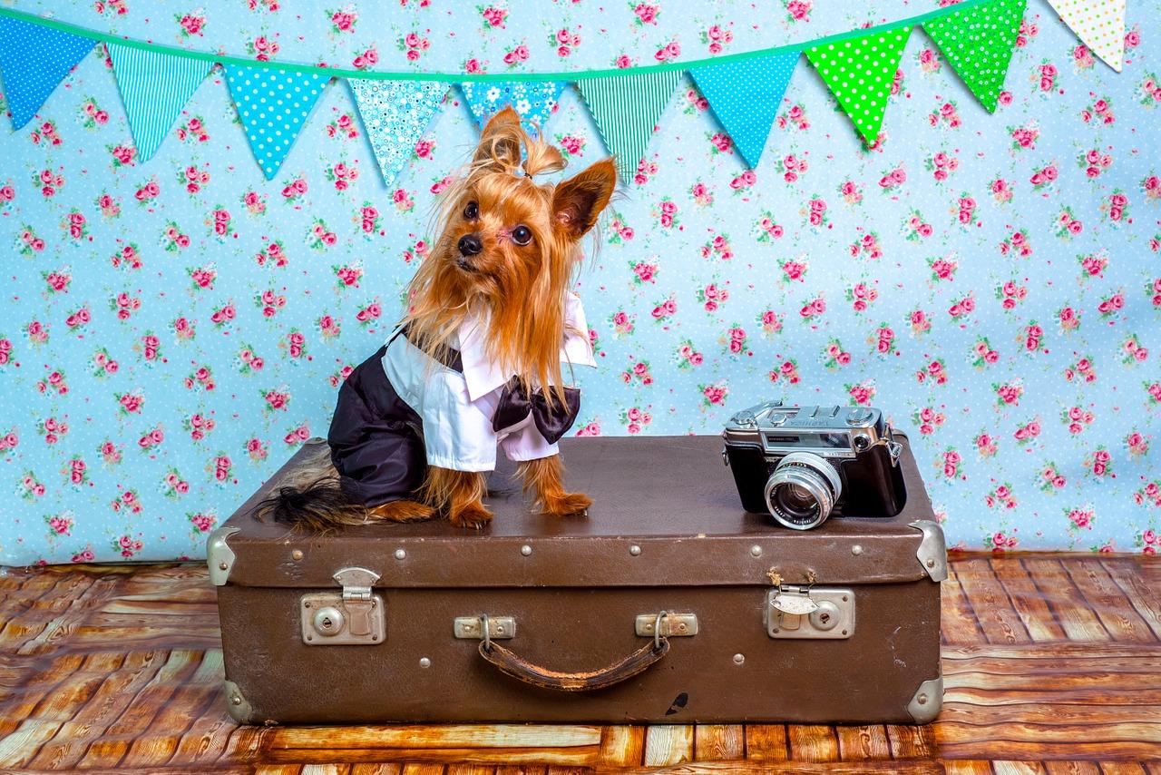 jedziesz-z-psem-lub-kotem-w-zagraniczą-podróż