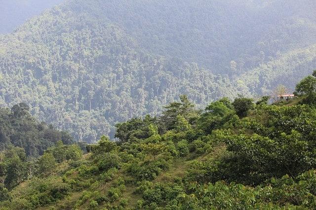 Dzika przyroda w Kolumbii.