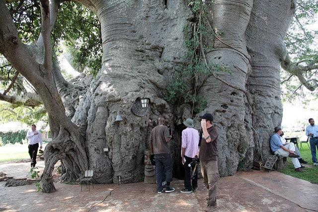 Bar w baobabie, Modjadjiskloof w RPA
